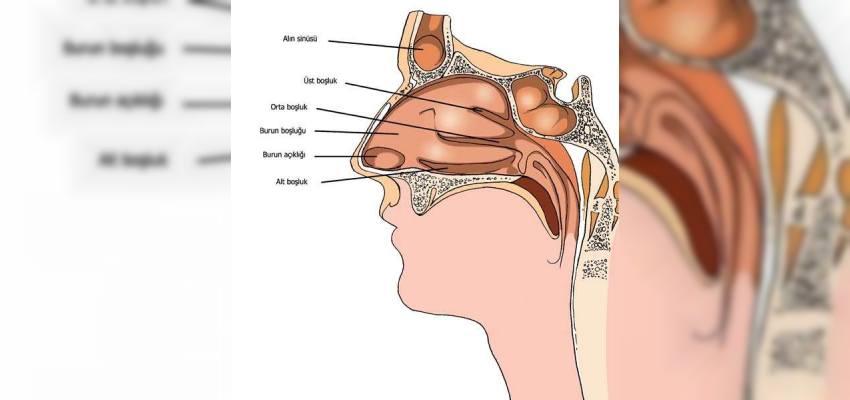 koku duyusu